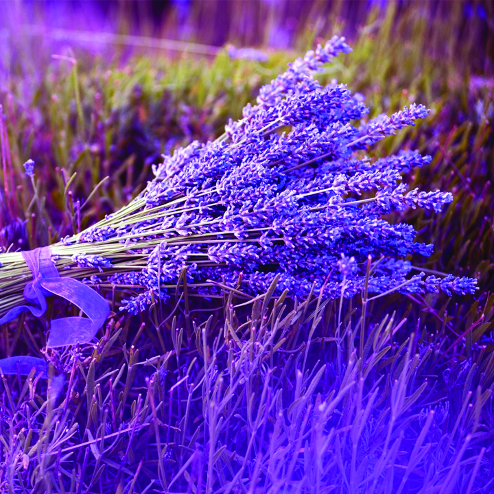 1.Lavender Flowers And Their Healing Properties