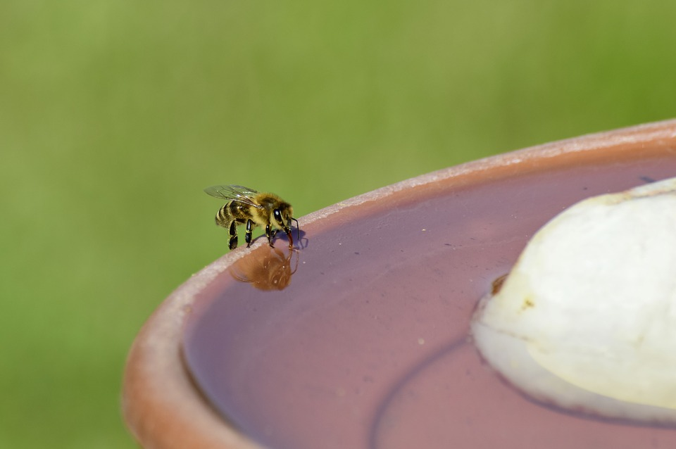 Bee drinking from fountain