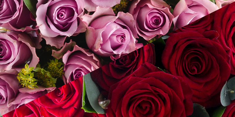 Mothers vs Lovers: Do we care more about Valentine's Day or Mother's Day?