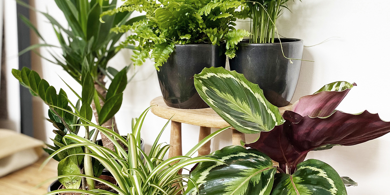 Find Your Perfect House Plant