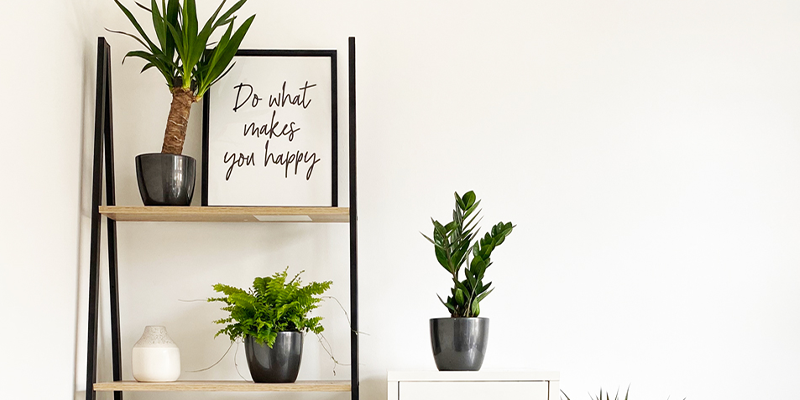 The Biggest Mistake You're Making with Your Houseplants