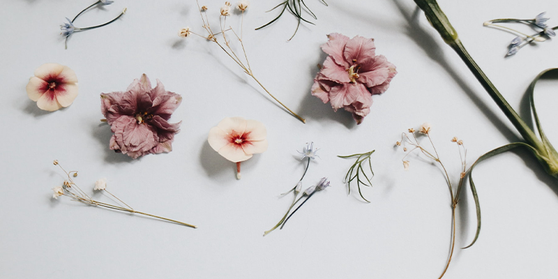 Flat lay of various dried flower heads and stems on white background