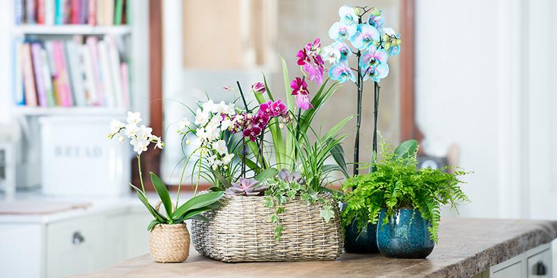 Health & lifestyle benefits of plants