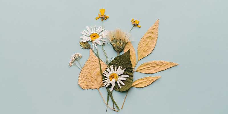 Pressed daisies, leaves, and small flowers on light blue/green background.
