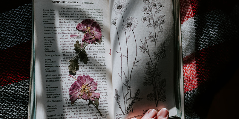 Open book showing pink pressed flowers on one side.