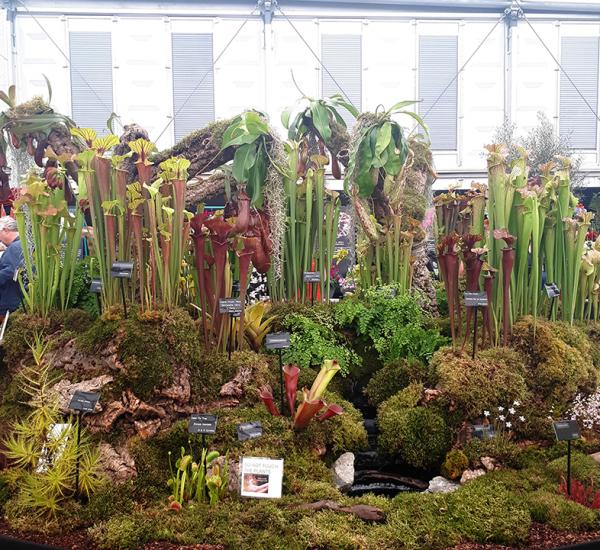 carnivorous plants (2)