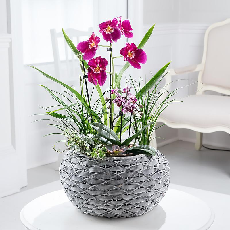 Mixed Orchid Planter