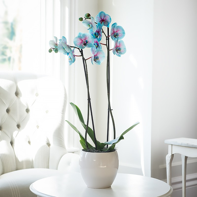 how to start a new orchid plant