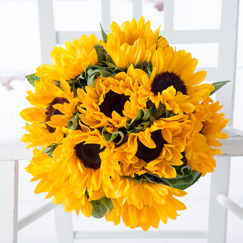 Fairtrade Simply Sunflowers